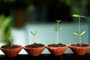 crecimiento-startup640
